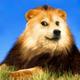 Аватар пользователя ArionWT