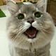 Аватар пользователя Daizy001