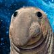 Аватар пользователя crazysensey