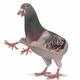 Аватар пользователя Tabakha