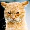 Аватар пользователя FavoriteCat
