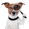 Аватар пользователя doggers