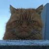 Аватар пользователя MENESK