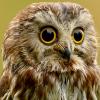 Аватар пользователя fzeety