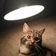 Аватар пользователя msfgood