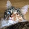 Аватар пользователя ipff