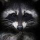 Аватар пользователя Izutoma