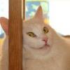 Аватар пользователя fenna
