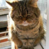 Аватар пользователя tomos1