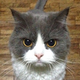 Аватар пользователя DimkaBrazhnik
