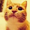 Аватар пользователя BesplatnyKot
