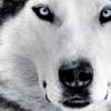 Аватар пользователя Ajsberg