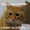 Аватар пользователя ObperzhenniyKot