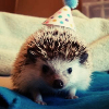 HappyHedgehog