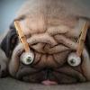 Аватар пользователя Soundengineer