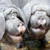 Аватар пользователя Swinuh