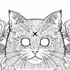 Аватар пользователя moonycat