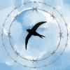Аватар пользователя TShin