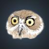 Аватар пользователя KFalkon