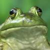 Аватар пользователя aft3rpati
