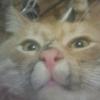 Аватар пользователя Angband75