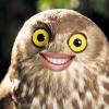 Аватар пользователя Saiddler