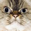 Аватар пользователя Olya.Goo