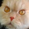 Аватар пользователя OliverQueen