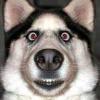 Аватар пользователя Asuwnik