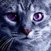 Аватар пользователя tsaroff