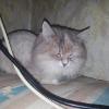 Аватар пользователя n909300