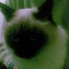Аватар пользователя mm.twe