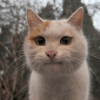 Аватар пользователя kuPikabulochki