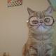 Аватар пользователя Cvetnoj