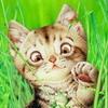 Аватар пользователя oMilkyway