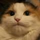 Аватар пользователя Harbingerr