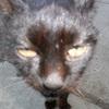 Аватар пользователя Janesk