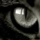 Аватар пользователя lailune