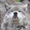 Аватар пользователя Wolf2007