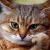 Аватар пользователя MatsalKoshek