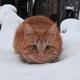 Аватар пользователя Zeru09