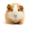 Аватар пользователя hamsteri