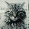 Аватар пользователя qide