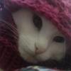 Аватар пользователя Lishen