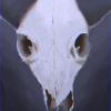 Аватар пользователя XTR0