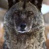Аватар пользователя CeriyWolk