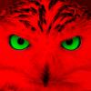 Аватар пользователя XEPAKC