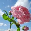 Аватар пользователя Ditska