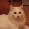Аватар пользователя Sima91