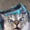 Аватар пользователя LordMeow